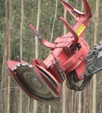 disk systems for feller bunchers | Logging news: Forest engineering